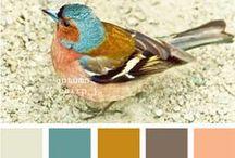 Color Schemes and Palettes