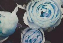 flor do meu jardim