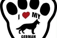 German Shepherd Dogs / My Favorite Breed