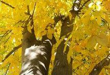 Trees, amazing trees / by Joyce Dupont