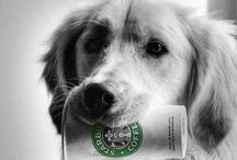Coffee Break..... / by Lisa Buchinski
