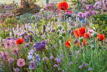 """""""C'est un jardin extraordinaire"""""""