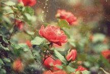 flowers & plants / by Lauren Thomas
