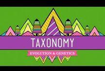 Taxonomy / Evolution Unit / by Melissa Shapiro