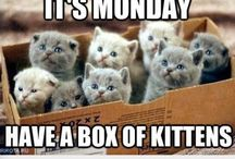 I Don't Like Mondays! / Silly memes, quotes, etc. about the workplace and the most dreaded day of the week.
