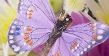 Birds & Butterfly & Bugs