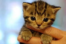 sabby's relatives / sabby: her feline and not-so-feline friends / by Arine Astraea