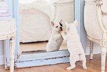// PETS & ANIMALS // / Cutie pie pets