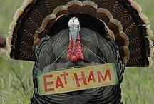Thanksgiving / by Christina Paulson