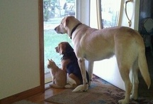 It's a doggy dog world...
