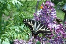 "Butterfly And Hummingbird Gardens / ""Possibility and promise greet me each day as I walk out into my garden. My vigor is renewed when I breathe in the earthiness and feel the dirt between my fingers. My garden is a peaceful spot to refresh my soul.""  ""Meems"" / by Glenda Collins Emerson"