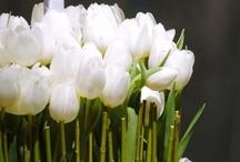 Celebrate - Spring / by Cheri Willis