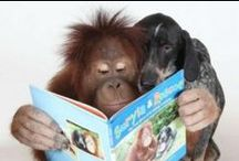 Furry Friends Reading