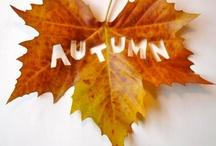 seasons // autumn