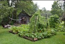 gardening into madness...