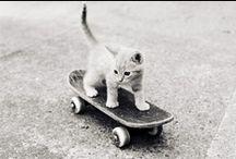 SKATE/SURF / by Cynthia Corona