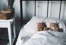 SLEEPING CATS / by Cynthia Corona