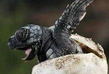 Billion Baby Turtles Giveaway