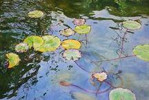 Watercolors / by Anita Shuler DeLong