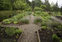 Garden - Potager Front Yard