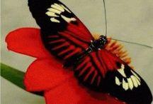 Butterflies / by Melysa