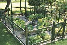 garden / by Cheri Howell