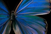 birds, butterflies, winged / by Cheri Howell