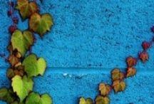 blues / greens / by Cheri Howell
