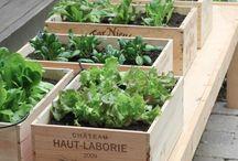 Urter / Herbs / Herbs