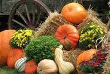 Thanksgiving & Fall / by Autumn Mckinney