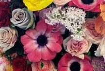 Les Fleurs.