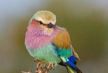 Birds / by Amy Christensen-Buenger