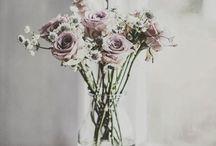 Flower Beauty  / by Nohealani G.