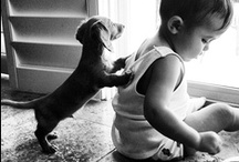 Puppy Love / Adorable dogs.