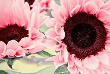 floral attributes / by Majenta Nicholls