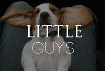 // little guys //
