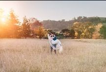 Southern Highlands Weddings / Weddings shot in the Southern Highlands, Berrima, Bowral, Mittagong and surroundings