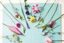 +Flowers+Plants+ / by Malin V
