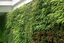 Gardens / by RainHarvest Systems
