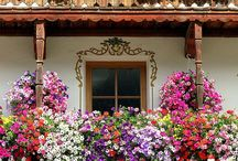 ✿Gardening & Outdoors✿ / by Jackie Cinfer