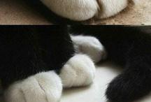 cute / by Amy Christine Martin