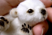 Cute animals~
