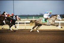 World's Fastest Athletes / Live Quarter Horse horse racing at Remington Park - March 2014. Photo by Jim Trosper.