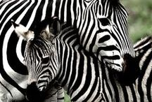 Amazing animals / Animals are beautiful. What would you do if we did not?