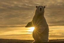 Bears & Cubs
