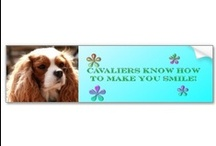 Cavalier King Charles Spaniels Zazzle Store / My Cavalier King Charles Spaniel photography gifts for #homedecor #gifts #shopping