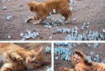meow mix / because I am a crazy cat lady