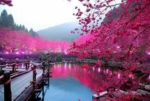 Amazing Scenery / Amazing Scenery!