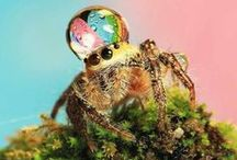 Spiders of Happiness / Mostly jumping spiders, but other little arachnids that make me smile.