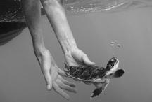 turtles / by SGK